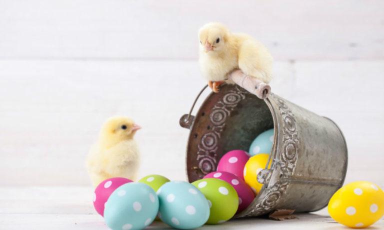 Osterküken mit Ostereiern